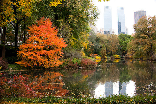 Central Park during the Fall! So pretty!